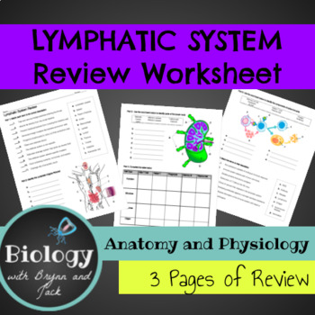 Lymphatic System Review Worksheet