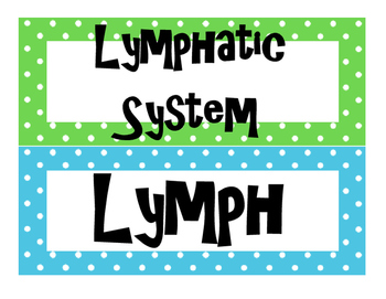Lymphatic and Excretory System  Word Wall for High School Anatomy
