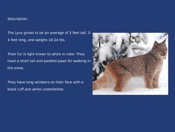 Lynx - power point - information pictures
