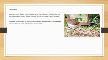 Lyrebird - Mimic Bird - Power Point - Information Facts Pictures