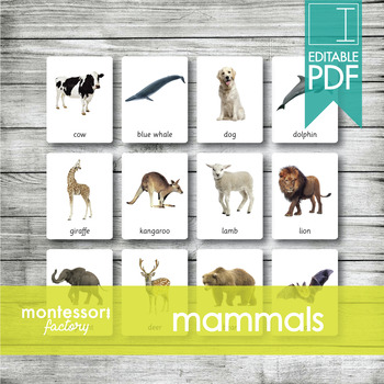 MAMMALS ANIMALS   MONTESSORI Printable Nomenclature Cards