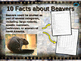MAMMALS IN YOUR BACKYARD BUNDLE: 7 engaging PPTs w facts, video links & handouts