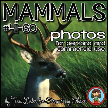 Photos Photographs MAMMALS BUNDLE 60 Photos  SAVE 50%!!