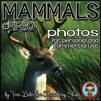 Photos Photographs MAMMALS BUNDLE 60 Photos  SAVE 50%!!