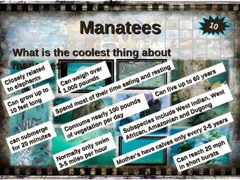 MANATEE: 10 facts. Fun, visual, engaging PPT (w links & free graphic organizer)