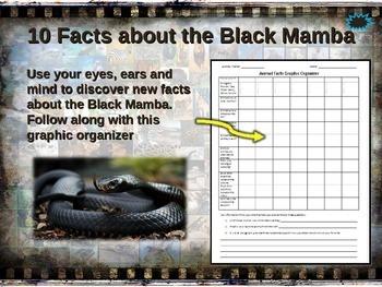 SNAKES: 7 PPTs: COBRA-ANACONDA-PYTHON-BROWN-RATTLESNAKE-BLACK MAMBA-SEA SNAKE