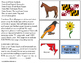 MARYLAND State Symbols ADAPTED BOOK for Special Education and Autism