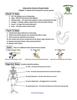MCSB – 3rd Grade Interactive Science (Study Guide/Test Combo Ch. 7-Lesson 2)