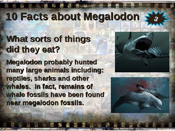 MEGALODON SHARKS: 10 facts. Fun, engaging PPT (w links & free graphic organizer)