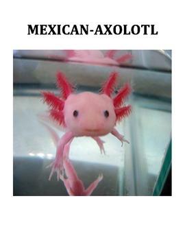 MEXICAN-AXOLOTL SALAMANDER (GRADES 2 - 4)
