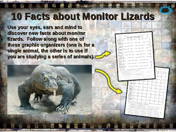MONITOR LIZARDS: 10 facts. Fun, engaging PPT (w links & free graphic organizer)