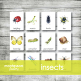 MONTESSORI Nomenclature Cards | Flash Cards | 3 Part Cards