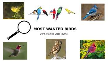MOST WANTED BIRDS: Bird Journal