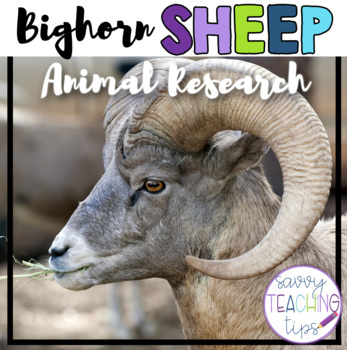 BIGHORN SHEEP - nonfiction animal research