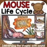 MOUSE (MAMMAL) LIFE CYCLE BOOM DIGITAL: GOOGLE CLASSROOM D