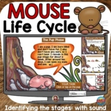 MOUSE (MAMMAL) LIFE CYCLE BOOM DIGITAL: GOOGLE CLASSROOM D