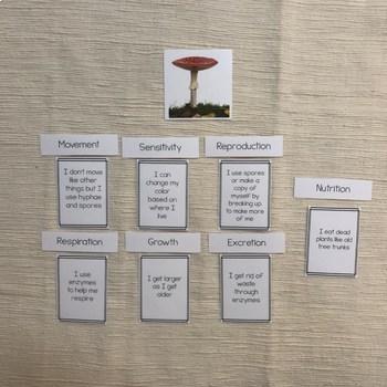 MRS GREN comparison between fungi, animal and plants