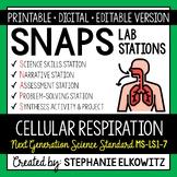 MS-LS1-7 Cellular Respiration Lab Stations Activity