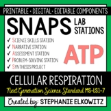 MS-LS1-7 Cellular Respiration Lab Stations Activity