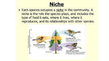 MS-LS2-2, niche examples slideshow