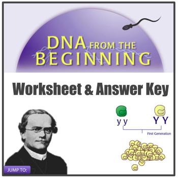 MS-LS3-2 Simulation worksheet: DNA From the Beginning