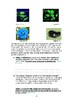 MYP 5 genetics criterion A assessment