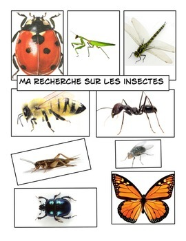 Ma recherche sur les insectes