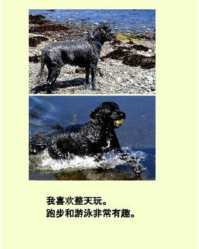 MacGyver the Wonder Dog: Adventure to Grandpa's Farm(Chinese version)