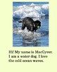 eBook MacGyver the Wonder Dog: Adventure to Grandpa's Farm Story Book