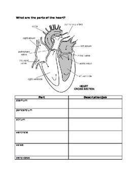 MacMillan McGraw Hill Science Chapter 3 Circulatory System Outline