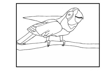 Macaw Bird Coloring Page