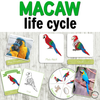 Macaw life cycle activities (FULL)