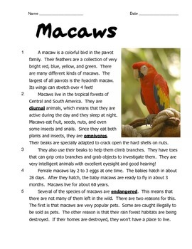 Macaws: Reading and Math