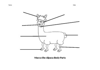 Macca the Alpaca label the body parts