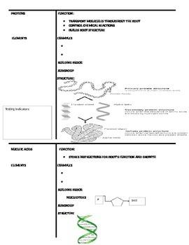 Biomolecules  Graphic Organizer