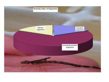 Macro- invertebrate collection analysis- Excel spreadsheet and graph