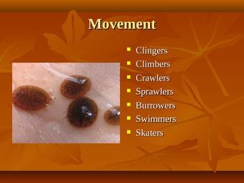 Macroinvertebrates and Stream Ecology Powerpoint
