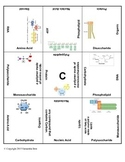 Macromolecule 9 square biology review or vocabulary practice