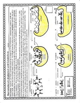 Macromolecule Anabolism and Catabolism