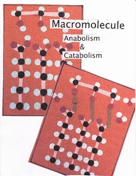 Macromolecule Anabolism and Catabolism