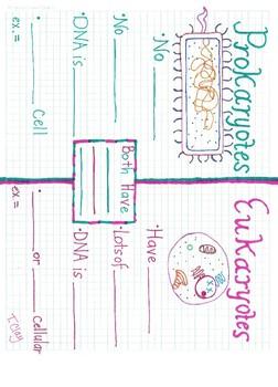Prokaryote/Eukaryote