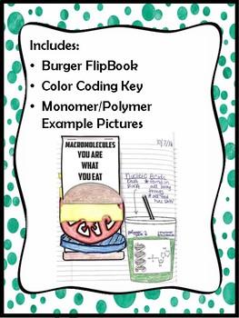 Macromolecule Burger Flipbook *INB*