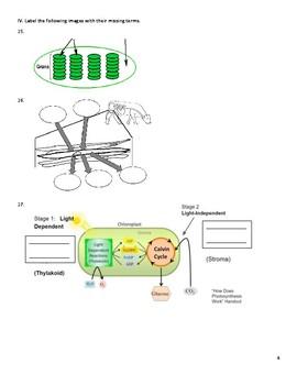 Macromolecule, Cellular Respiration, & Photosynthesis Study Guide