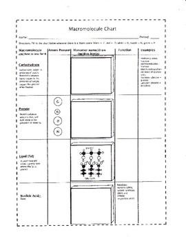 Macromolecule Chart (Biomolecules to Draw and Make)