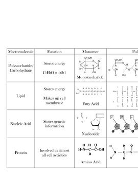 macromolecule chart biomolecules by mr affro tpt. Black Bedroom Furniture Sets. Home Design Ideas
