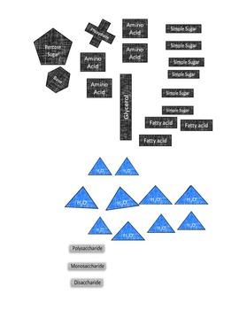 Macromolecule Digital Resource