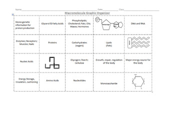 Macromolecule Graphic Organizer