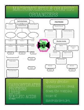 Macromolecule Graphic Organizers