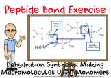 Macromolecule Peptide Bond Practice Exercise
