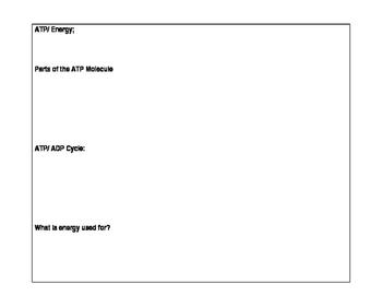 Macromolecule Review Sheet